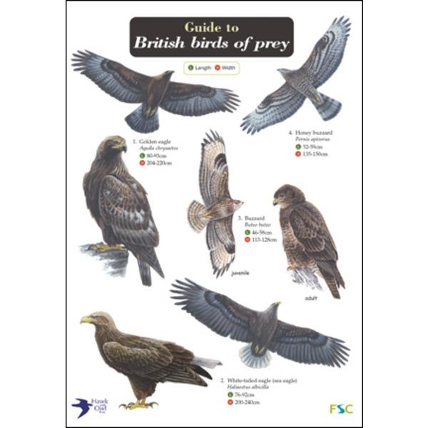 FSC Field Guide to Birds of Prey