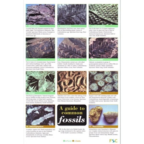 FSC Field Guide to Common Fossils