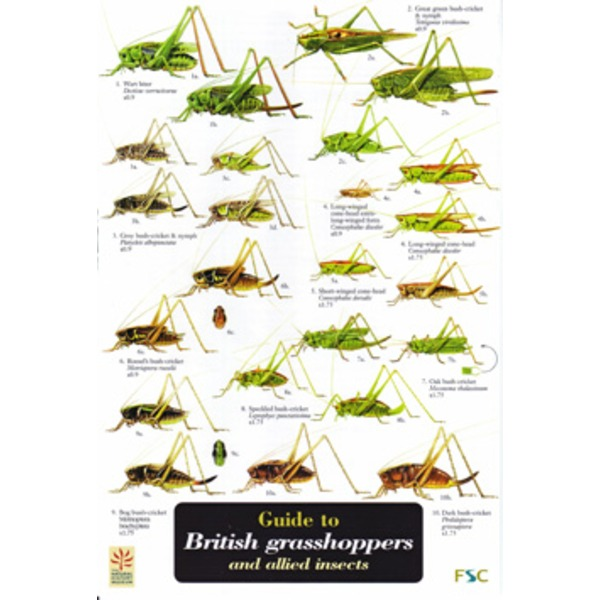 FSC Field Guide to British grasshoppers and allied insects