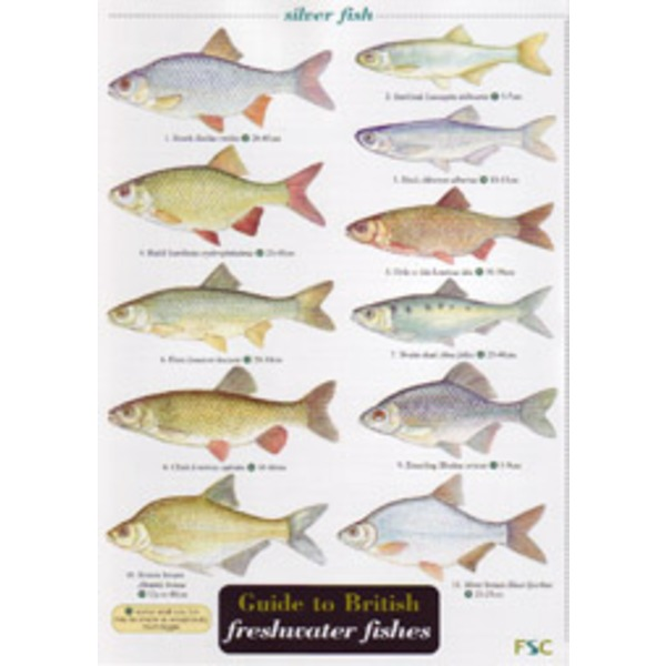 Freshwater fish guide fresh water fish kenya 2017 fish for Fishpond uk