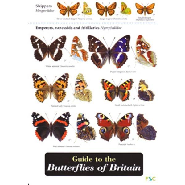FSC Field Guide to Butterflies of Britain
