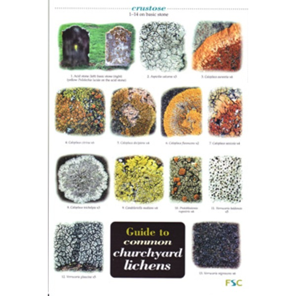 FSC Field Guide to Common Churchyard Lichens