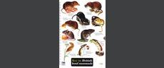 FSC Field Guide to Land Mammals