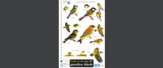 FSC Field Guide to the 50 most common Garden Birds