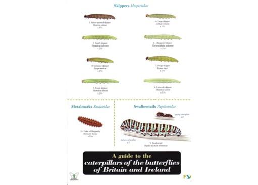 FSC Field Guide to Caterpillars of butterflies of Britain & Ireland