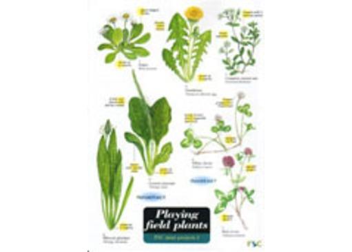 Playing Field Plants | Field Guides | Greenman Bushcraft