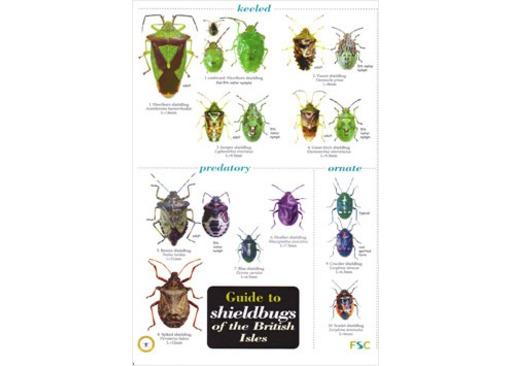 FSC Chart - Shieldbugs of the British Isles