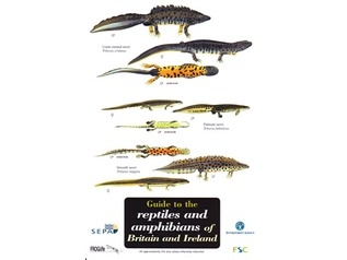 FSC Field Guide to Reptiles and Amphibians of Britain and Ireland
