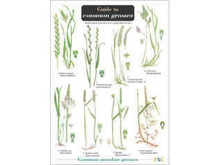 FSC Guide to Grasses