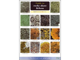 FSC Field Guide to Rocky Shore Lichens