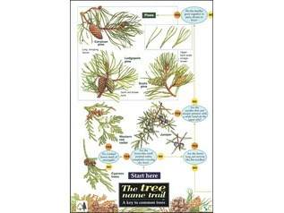 FSC Field Guide to Trees of Britain