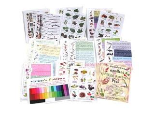 Deciduous Woodland Wildlife School Pack