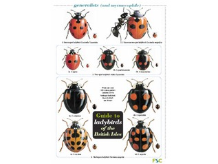 FSC Field Guide to Ladybirds of the British Isles