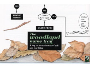 FSC Field Guide to Woodland Mini-beasts