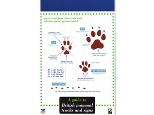 FSC guide to British mammal tracks and signs