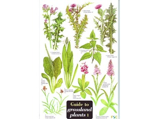 FSC Field Guide to Grassland Plants