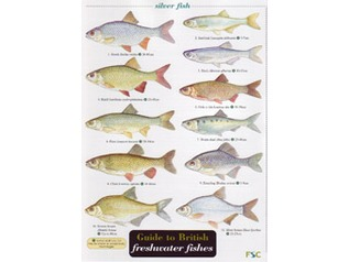 FSC Field Guide to British Freshwater Fish