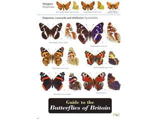 FSC Field Guide to Butterflies of Britain