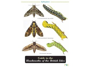 FSC Field Guide to Hawkmoths of the British Isles